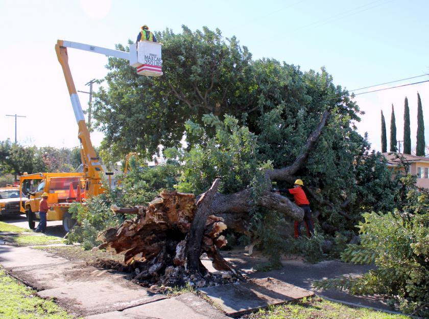Gerald Ave Fallen Tree