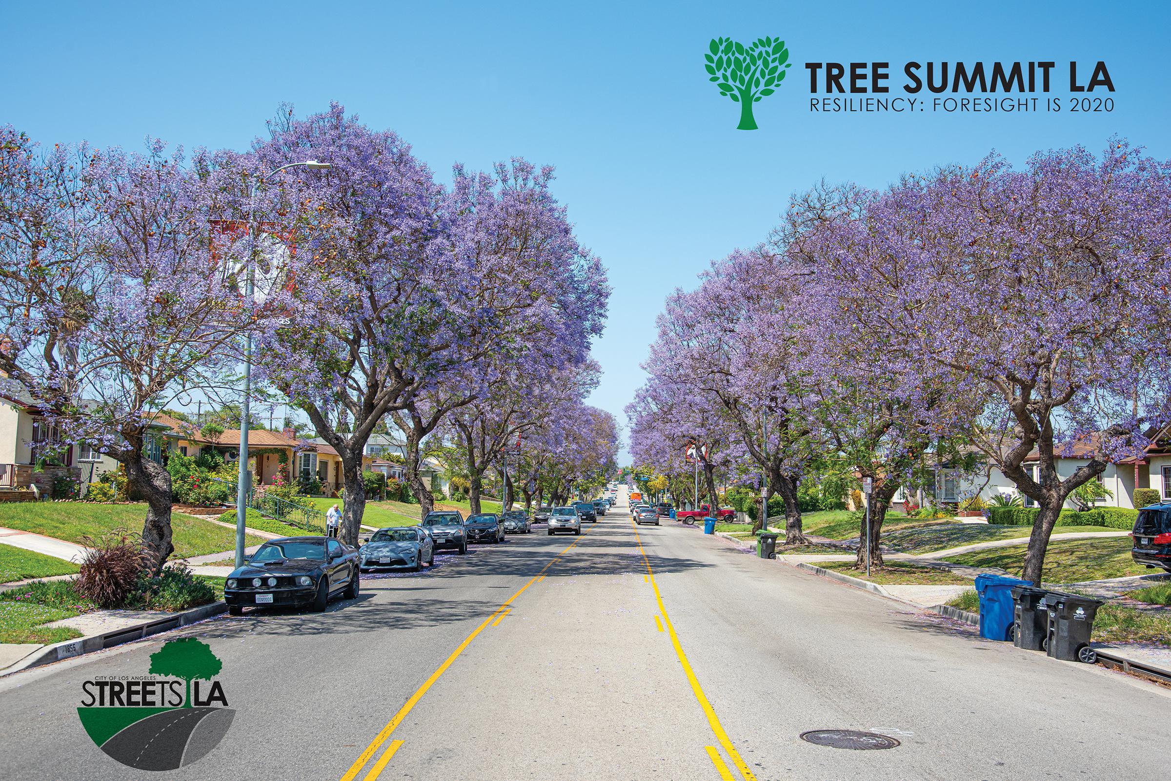 Tree Summit 2020
